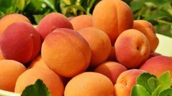 apricots_fruit_ripe_grass_110411_2560x1024
